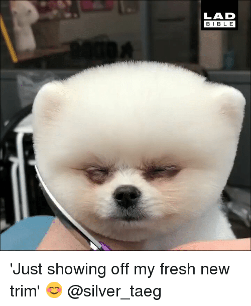 Fresh, Memes, and Silver: LAD  BIBL E 'Just showing off my fresh new trim' 😊 @silver_taeg