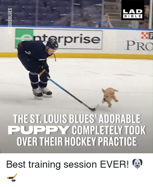 adorable puppy: LAD  BIBL E  rprise  PRO  THE ST. LOUIS BLUES' ADORABLE  PUPPY COMPLETELY TOOK  OVER THEIR HOCKEY PRACTICE Best training session EVER! 🐶🏒