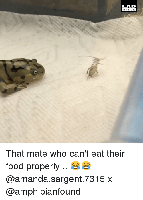 Food, Memes, and 🤖: LAD  BIBL E That mate who can't eat their food properly... 😂😂 @amanda.sargent.7315 x @amphibianfound