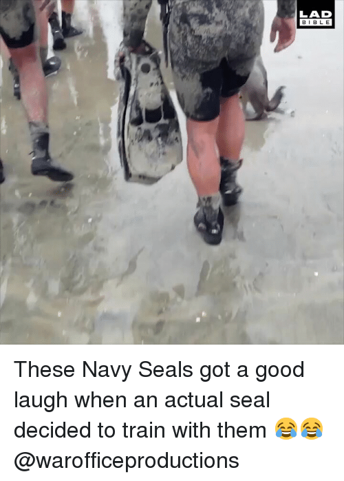 Memes, Good, and Navy: LAD  BIBL E These Navy Seals got a good laugh when an actual seal decided to train with them 😂😂 @warofficeproductions