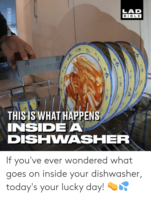 Dank, 🤖, and Day: LAD  BIBL E  THISIS WHAT HAPPENS  INSIDEA  DISHHWASHER If you've ever wondered what goes on inside your dishwasher, today's your lucky day! 🧽💦