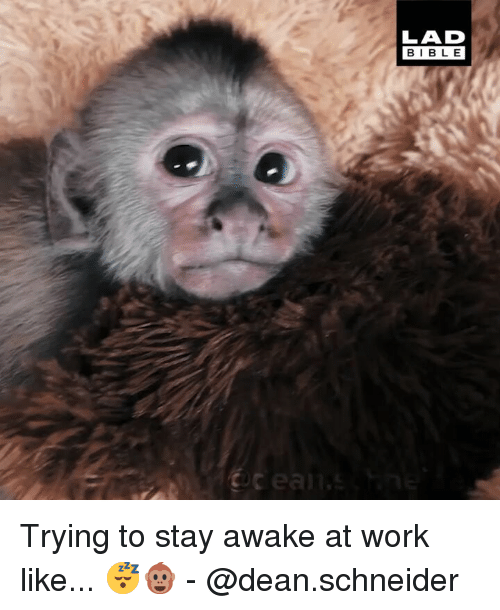 Stay Awake: LAD  BIBL E Trying to stay awake at work like... 😴🐵 - @dean.schneider