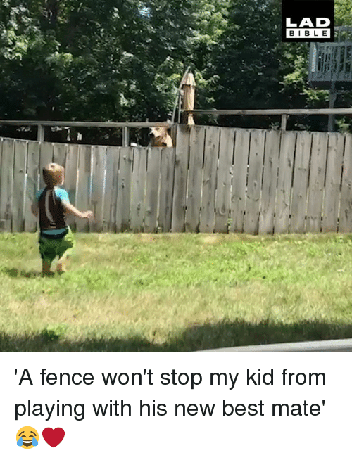 Dank, Best, and Bible: LAD  BIBLE 'A fence won't stop my kid from playing with his new best mate' 😂❤️