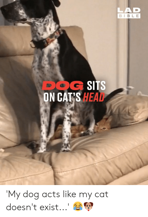 Cats, Dank, and Head: LAD  BIBLE  DOG SITS  ON CAT'S HEAD 'My dog acts like my cat doesn't exist...'  😂🐶