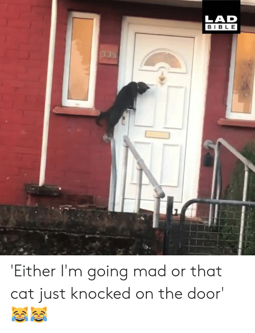 Dank, Bible, and Mad: LAD  BIBLE 'Either I'm going mad or that cat just knocked on the door' 😹😹