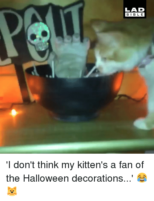 Halloween, Memes, and Bible: LAD  BIBLE 'I don't think my kitten's a fan of the Halloween decorations...' 😂🐱