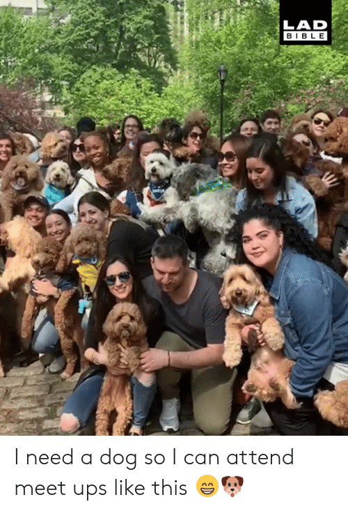 Dank, Ups, and Bible: LAD  BIBLE I need a dog so I can attend meet ups like this 😁🐶