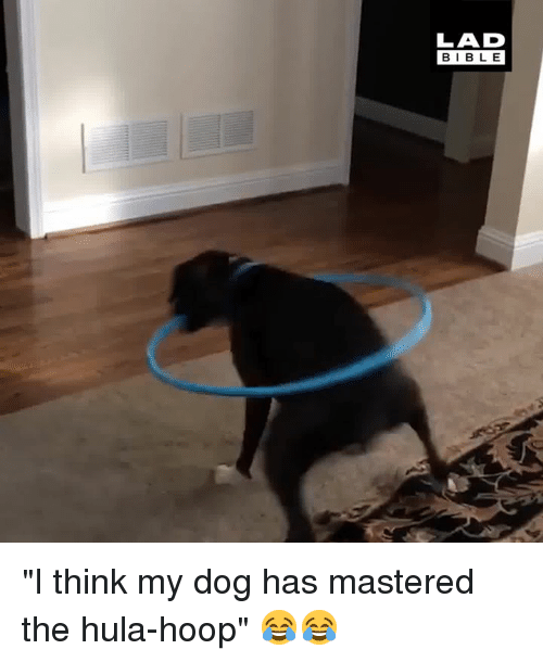 "Hoop: LAD  BIBLE ""I think my dog has mastered the hula-hoop"" 😂😂"