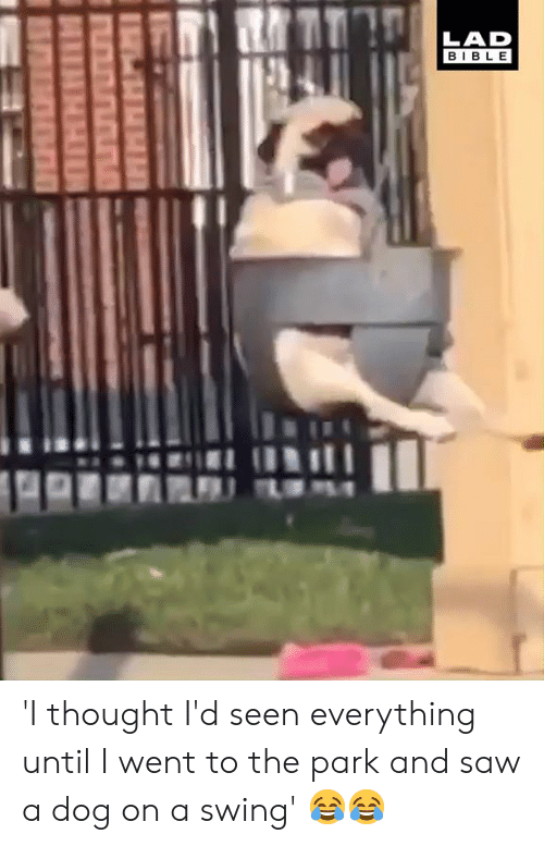 Dog On: LAD  BIBLE 'I thought I'd seen everything until I went to the park and saw a dog on a swing' 😂😂