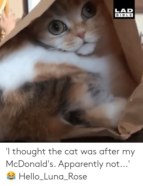 Apparently, Dank, and Hello: LAD  BIBLE 'I thought the cat was after my McDonald's. Apparently not...' 😂  Hello_Luna_Rose