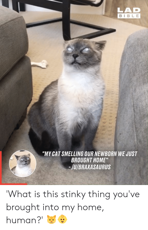"""stinky: LAD  BIBLE  """"MY CAT SMELLING OUR NEWBORN WE JUST  BROUGHT HOME""""  -/u/BRAXASAURUS 'What is this stinky thing you've brought into my home, human?' 🐱👶"""