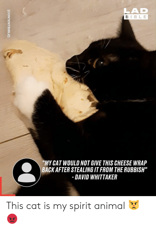 """spirit animal: LAD  BIBLE  """"MY CAT WOULD NOT GIVE THIS CHEESE WRAP  BACK AFTER STEALING IT FROM THE RUBBISH""""  DAVID WHITTAKER  [CONTENTBIBLE This cat is my spirit animal 😾😡"""