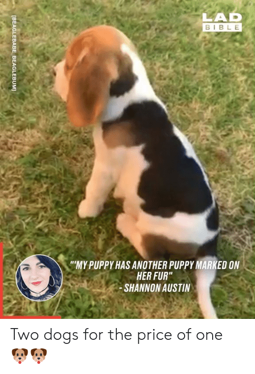 "Dank, Dogs, and Bible: LAD  BIBLE  ""MY PUPPY HAS ANOTHER PUPPY MARKED ON  HER FUR""  SHANNON AUSTIN  [BEAGLEBABE BEAGLEBUM] Two dogs for the price of one 🐶🐶"
