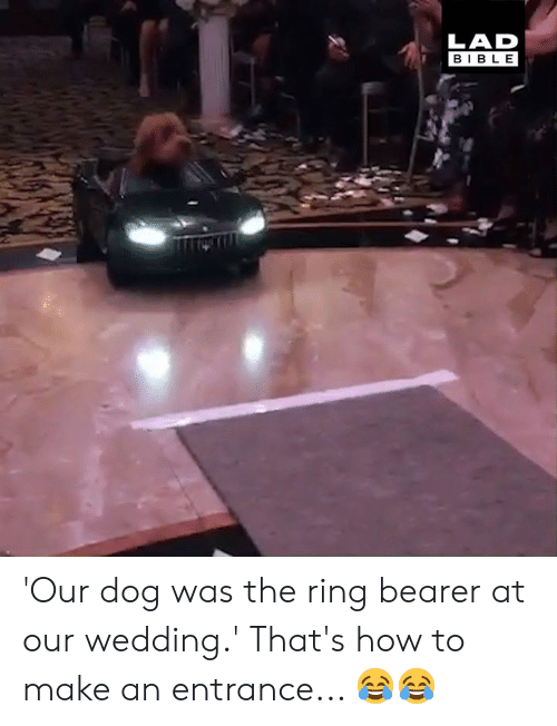Dank, The Ring, and Bible: LAD  BIBLE 'Our dog was the ring bearer at our wedding.' That's how to make an entrance... 😂😂