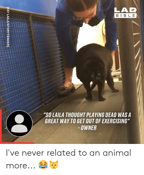 "Dank, Animal, and Bible: LAD  BIBLE  ""SO LAILA THOUGHT PLAYING DEAD WAS A  GREAT WAY TO GET OUT OF EXERCISING""  -OWNER  [FAT LAILA/STORYTENDER] I've never related to an animal more... 😂🐱"