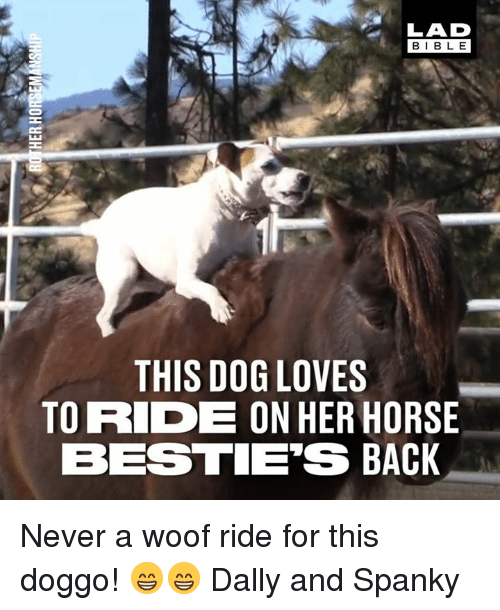 Dank, Bible, and Horse: LAD  BIBLE  THIS DOG LOVES  TO RIDE ON HER HORSE  BESTIE'S BACK Never a woof ride for this doggo! 😁😁  Dally and Spanky