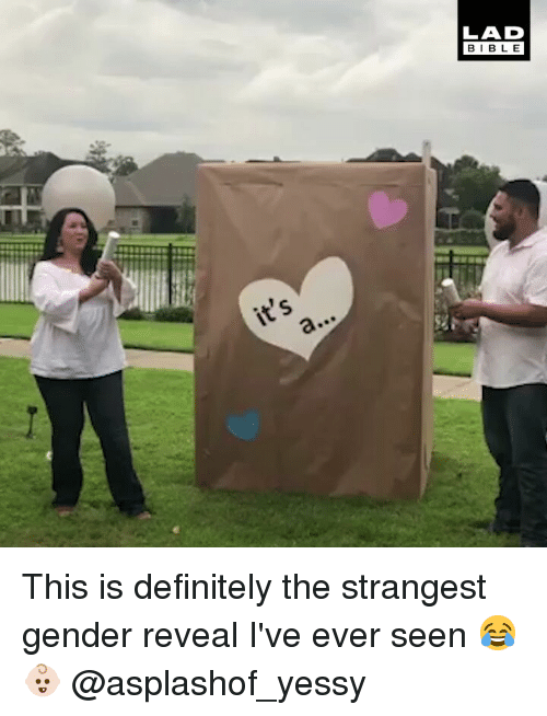 Definitely, Memes, and Bible: LAD  BIBLE This is definitely the strangest gender reveal I've ever seen 😂👶🏻 @asplashof_yessy