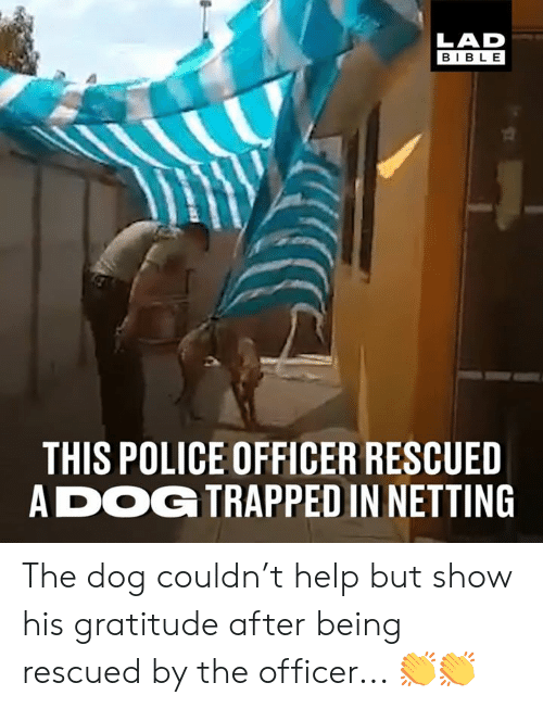 gratitude: LAD  BIBLE  THIS POLICE OFFICER RESCUED  ADOG TRAPPED IN NETTING The dog couldn't help but show his gratitude after being rescued by the officer... 👏👏