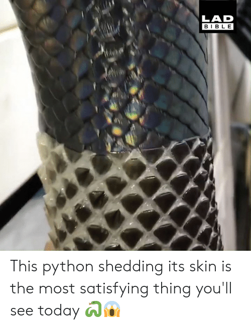 shedding: LAD  BIBLE This python shedding its skin is the most satisfying thing you'll see today 🐍😱