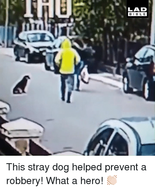 Dank, Bible, and 🤖: LAD  BIBLE  Til This stray dog helped prevent a robbery! What a hero! 👏🏻