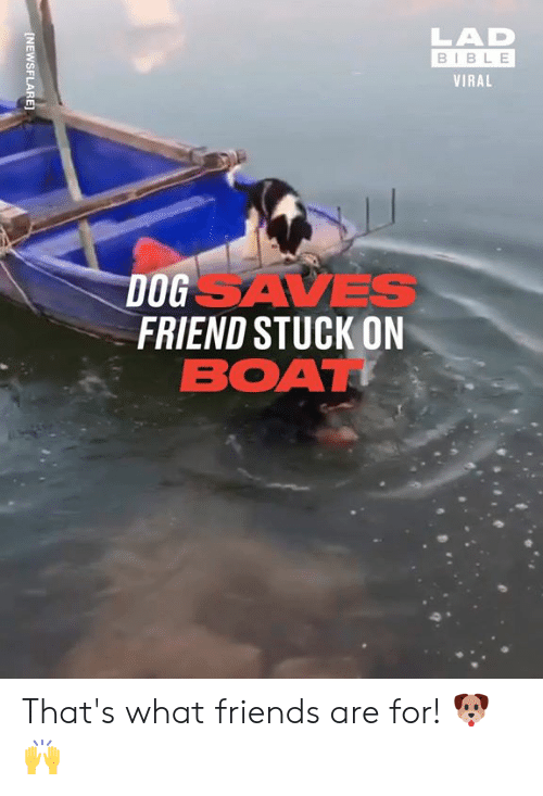 Lad Bible: LAD  BIBLE  VIRAL  DOGSAVES  FRIEND STUCK ON  BOAT  [NEWSFLARE] That's what friends are for! 🐶🙌