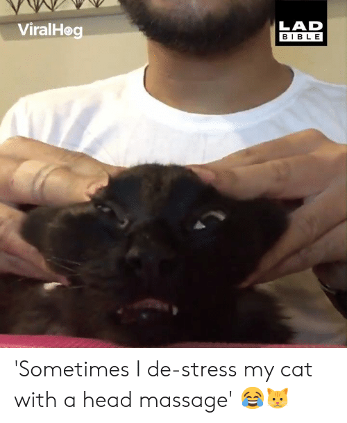 Dank, Head, and Massage: LAD  BIBLE  ViralHeg 'Sometimes I de-stress my cat with a head massage' 😂🐱