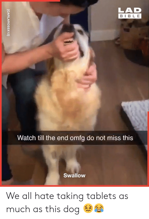Tablets: LAD  BIBLE  Watch till the end omfg do not miss this  Swallow  [CARLAROSSX12] We all hate taking tablets as much as this dog 😖😂