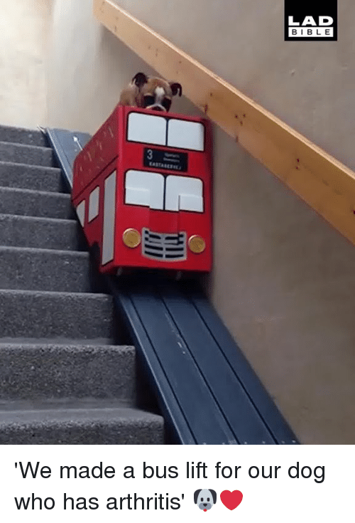 Arthritis: LAD  BIBLE 'We made a bus lift for our dog who has arthritis' 🐶❤