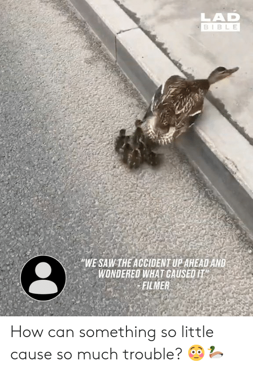 Dank, Saw, and Bible: LAD  BIBLE  WE SAW THE ACCIDENT UP AHEAD AND  WONDERED WHAT CAUSED IT  FILMER How can something so little cause so much trouble? 😳🦆
