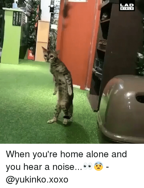 Being Alone, Home Alone, and Memes: LAD  BIBLE When you're home alone and you hear a noise...👀😨 - @yukinko.xoxo