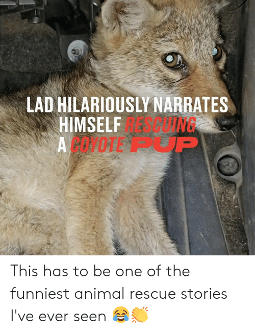 Dank, Animal, and 🤖: LAD HILARIOUSLY NARRATES  APING  HIMSELF  ACOPOTE P This has to be one of the funniest animal rescue stories I've ever seen 😂👏