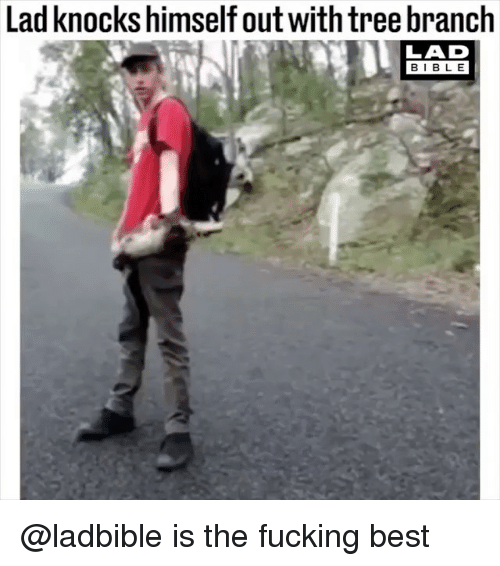 Bibled: Lad knocks himself out withtree branch  LAD  BIBL E @ladbible is the fucking best
