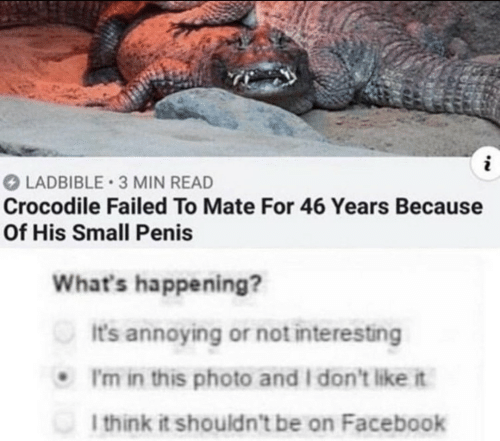 Facebook, Penis, and Annoying: LADBIBLE 3 MIN READ  Crocodile Failed To Mate For 46 Years Because  Of His Small Penis  What's happening?  It's annoying or not interesting  I'm in this photo and I don't like it  I think it shouldn't be on Facebook