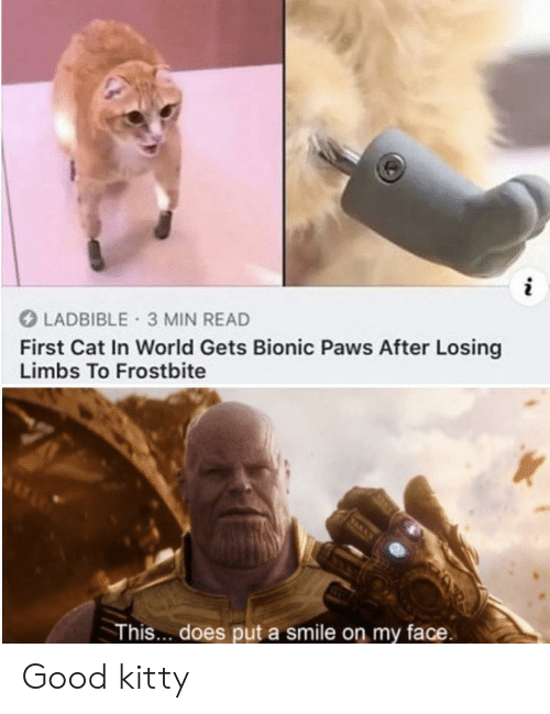 Good, Smile, and World: LADBIBLE 3 MIN READ  First Cat In World Gets Bionic Paws After Losing  Limbs To Frostbite  This... does put a smile on my face. Good kitty