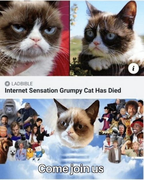 Grumpy Cat: LADBIBLE  Internet Sensation Grumpy Cat Has Died  Comejoin us