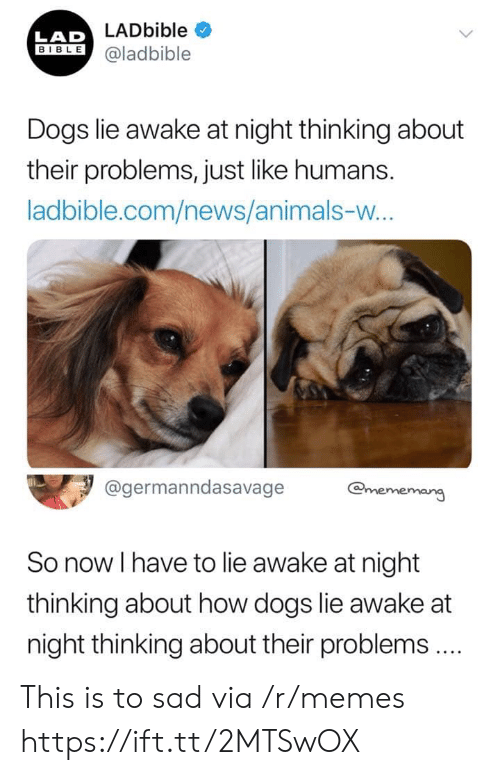Lad Bible: LADbible  LAD  BIBLE@ladbible  Dogs lie awake at night thinking about  their problems, just like humans.  ladbible.com/news/animals-w...  @germanndasavage  @mememang  So now I have to lie awake at night  thinking about how dogs lie awake at  night thinking about their problems.  > This is to sad via /r/memes https://ift.tt/2MTSwOX