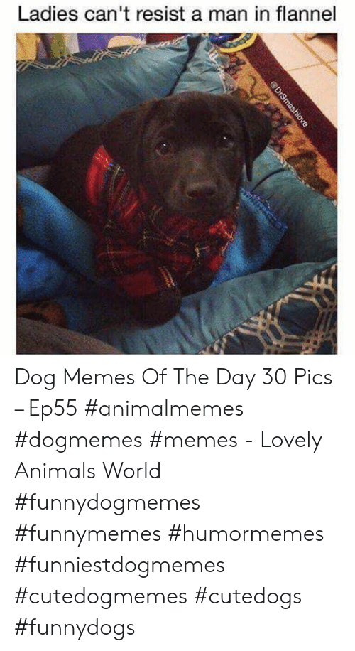 Dog Memes: Ladies can't resist a man in flannel  @DrSmashlove Dog Memes Of The Day 30 Pics – Ep55 #animalmemes #dogmemes #memes - Lovely Animals World #funnydogmemes #funnymemes #humormemes #funniestdogmemes #cutedogmemes #cutedogs #funnydogs