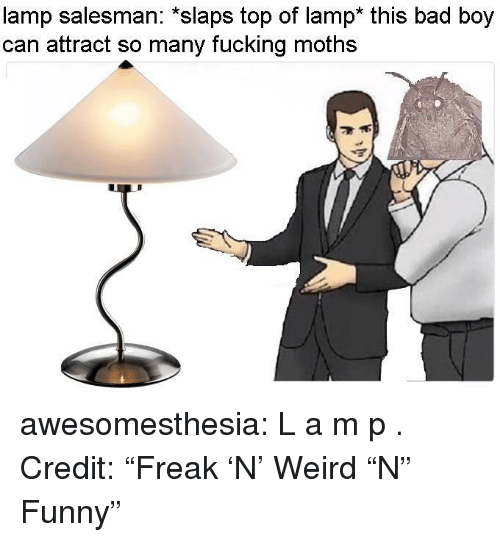"Bad, Fucking, and Funny: lamp salesman: *slaps top of lamp* this bad boy  can attract so many fucking moths  4  9  9 awesomesthesia:  L a m p . Credit: ""Freak 'N' Weird ""N"" Funny"""