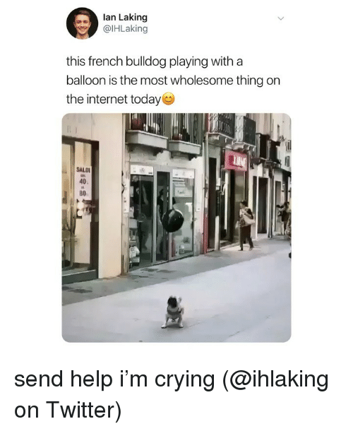 Crying, Internet, and Memes: lan Laking  @lHLaking  this french bulldog playing with a  balloon is the most wholesome thing on  the internet today  SALD  40  во send help i'm crying (@ihlaking on Twitter)