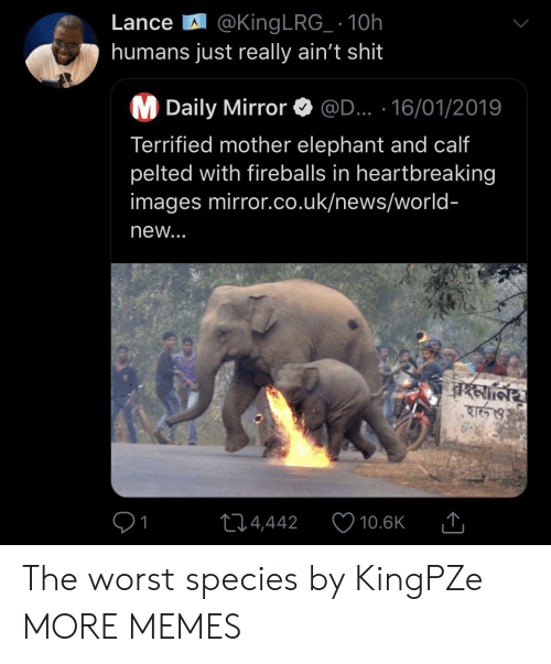 daily mirror: Lance @King LRG_ 10h  humans just really ain't shit  M Daily Mirror  @D... 16/01/2019  Terrified mother elephant and calf  pelted with fireballs in heartbreaking  images mirror.co.uk/news/world-  new...  বহমা্নিয়  হার্ও  214,442  10.6K The worst species by KingPZe MORE MEMES