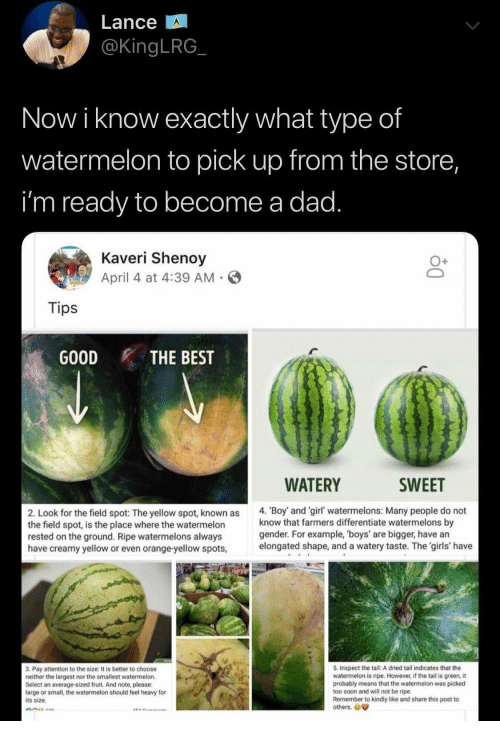 tail: Lance  @KingLRG  Now i know exactly what type of  watermelon to pick up from the store,  i'm ready to become a dad.  Kaveri Shenoy  April 4 at 4:39 AM  Tips  GOOD  THE BEST  WATERY  SWEET  4. 'Boy and 'girl' watermelons: Many people do not  know that farmers differentiate watermelons by  gender. For example, 'boys' are bigger, have an  elongated shape, and a watery taste. The 'girls' have  2. Look for the field spot: The yellow spot, known as  the field spot, is the place where the watermelon  rested on the ground. Ripe watermelons always  have creamy yellow or even orange-yellow spots,  5. Inspect the tail: A dried tail indicates that the  watermelon is ripe. However, if the tail is green, it  probably means that the watermelon was picked  too soon and will not be ripe.  Remember to kindly like and share this post to  others.  3. Pay attention to the size: It is better to choose  neither the largest nor the smallest watermelon.  Select an average-sized fruit. And note, please:  large or small, the watermelon should feel heavy for  its size.
