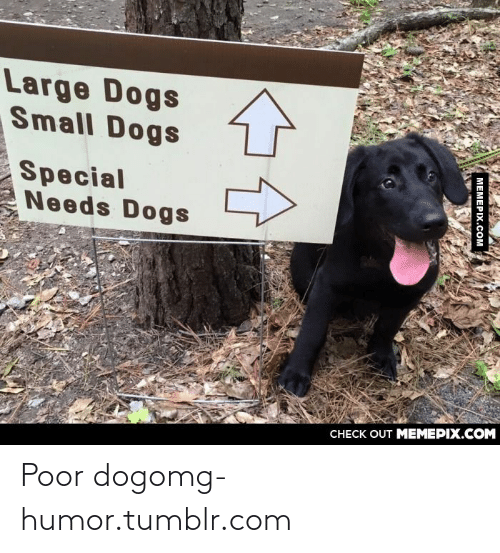 large dogs: Large Dogs  Small Dogs  Special  Needs Dogs  CНECK OUT MEМЕРIХ.COM  MEMEPIX.COM Poor dogomg-humor.tumblr.com