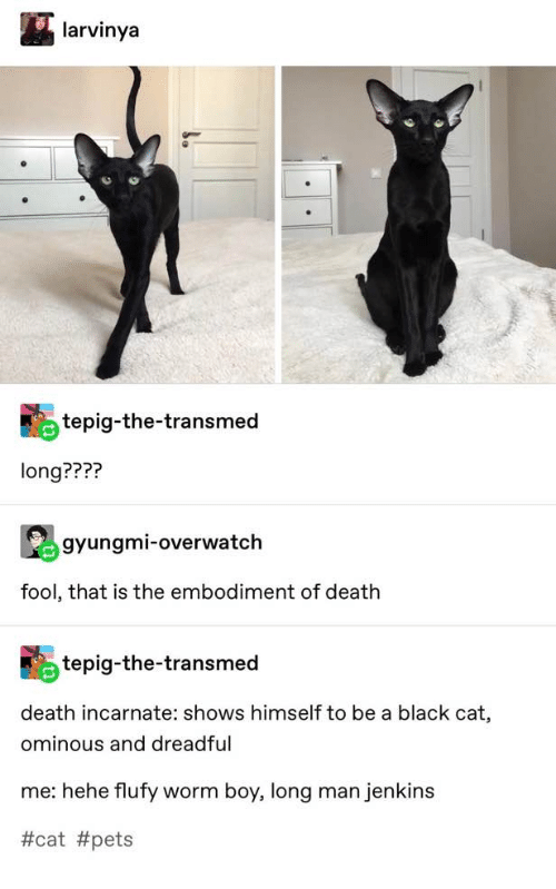 Black, Pets, and Death: larvinya  tepig-the-transmed  long????  gyungmi-overwatch  fool, that is the embodiment of death  tepig-the-transmed  death incarnate: shows himself to be a black cat,  ominous and dreadful  me: hehe flufy worm boy, long man jenkins