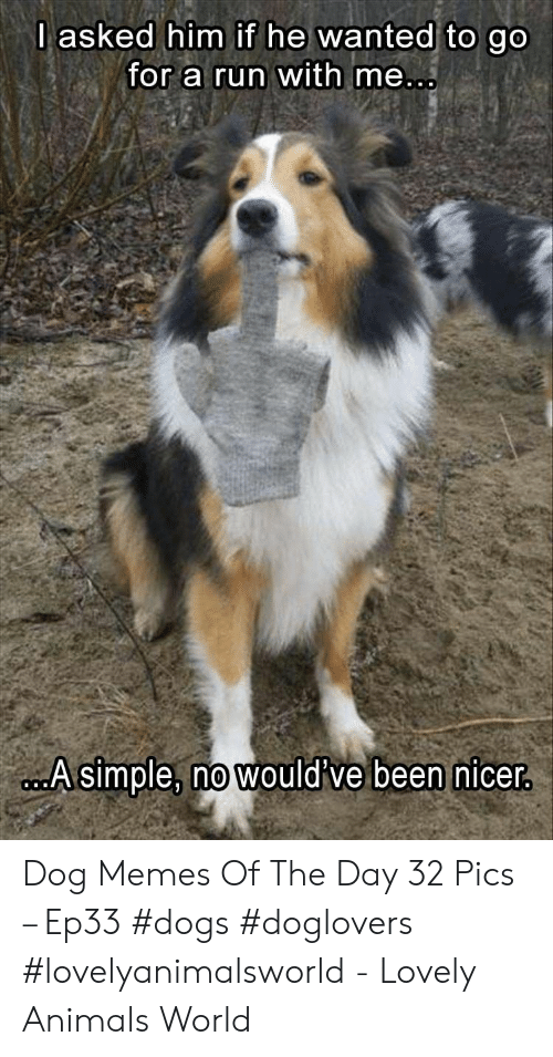 Animals, Dogs, and Memes: lasked him if he wanted to go  for a run with me  A simple, no would've been nicer Dog Memes Of The Day 32 Pics – Ep33 #dogs #doglovers #lovelyanimalsworld - Lovely Animals World