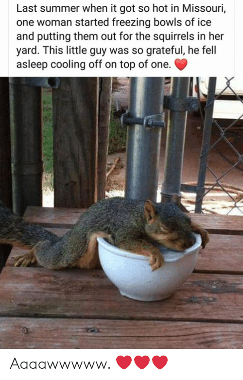 Memes, Summer, and Missouri: Last summer when it got so hot in Missouri,  one woman started freezing bowls of ice  and putting them out for the squirrels in her  yard. This little guy was so grateful, he fell  asleep cooling off on top of one. Aaaawwwww. ❤️❤️❤️