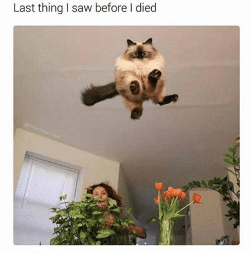 I Died: Last thing I saw before I died  Us