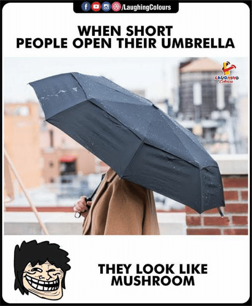 Indianpeoplefacebook, Mushroom, and Open: /LaughingColours  WHEN SHORT  PEOPLE OPEN THEIR UMBRELLA  LAUOHING  Celeurs  THEY LOOK LIKE  MUSHROOM