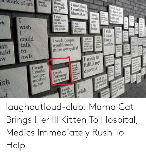Rush: laughoutloud-club:  Mama Cat Brings Her Ill Kitten To Hospital, Medics Immediately Rush To Help