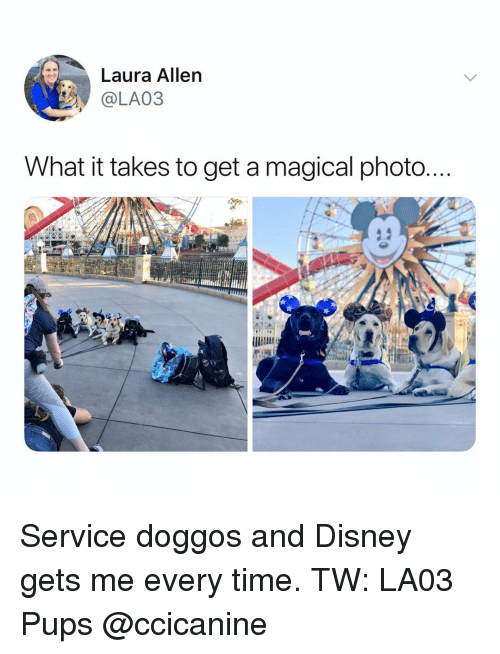 Disney, Memes, and Time: Laura Allen  @LA03  What it takes to get a magical photo Service doggos and Disney gets me every time. TW: LA03 Pups @ccicanine