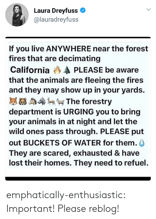 Animals, Target, and Tumblr: Laura Dreyfuss  @lauradreyfuss  If you live ANYWHERE near the forest  fires that are decimating  California (3 PLEASE be aware  that the animals are fleeing the fires  and they may show up in your yards.  膩63 4 The forestry  department is URGING you to bring  your animals in at night and let the  wild ones pass through. PLEASE put  out BUCKETS OF WATER for them.  They are scared, exhausted & have  lost their homes. They need to refuel emphatically-enthusiastic: Important! Please reblog!